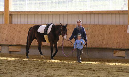 Die Bedeutung des Pferdes